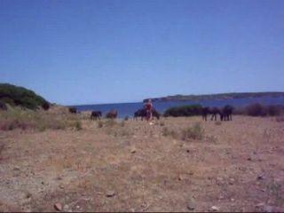 Horses Vid