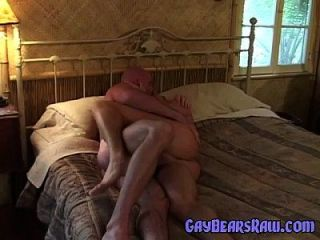Gay Bear Sexing Gay Porn