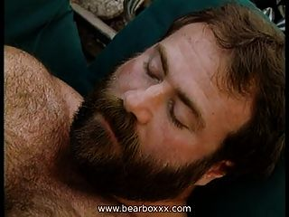 Hairy Bears Blow Best