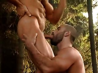 Bear Threesome In The Forest