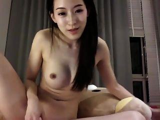 Asia Fox 1