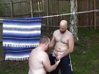 Bears In The Backyard